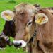 Fijadas las condiciones higiénico-sanitarias y de bienestar animal de las explotaciones ganaderas