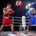 Este sábado se celebra en Tudela la primera velada de boxeo organizada por el Boxing Club Boxrus